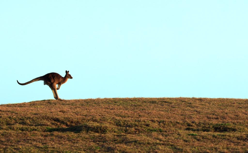 Mutterschutz_Kangaroo